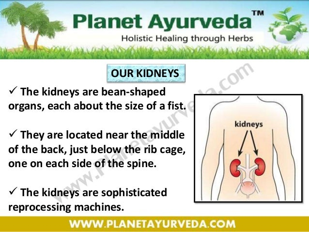 Best Diet Plan for Kidney Failure Patients and Avoid Dialysis