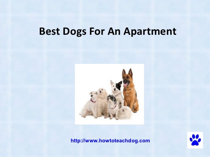 Best dog for an apartment