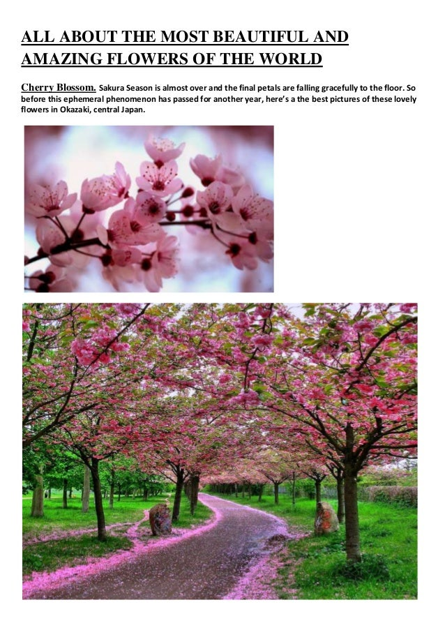 ALL ABOUT THE MOST BEAUTIFUL AND AMAZING FLOWERS OF THE WORLD Cherry Blossom. Sakura Season is almost over and the final p...