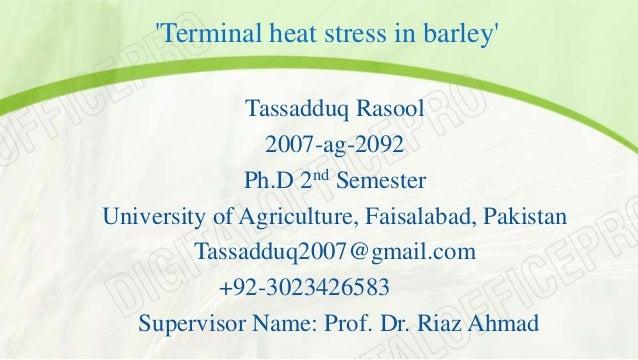 'Terminal heat stress in barley'  Tassadduq Rasool  2007-ag-2092  Ph.D 2nd Semester  University of Agriculture, Faisalabad...