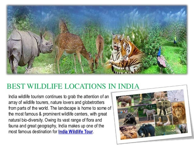 BEST WILDLIFE LOCATIONS IN INDIA India wildlife tourism continues to grab the attention of an array of wildlife tourers, n...