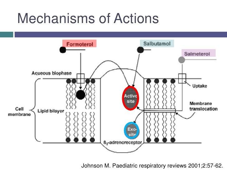 Ventolin action mechanism / Clomid e gonasi 5000