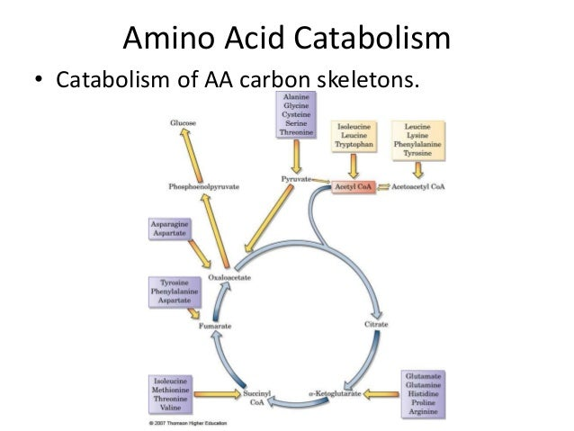 catabolic and anabolic compare and contrast