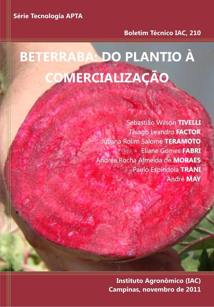 BETERRABA: DO PLANTIO À COMERCIALIZAÇÃO