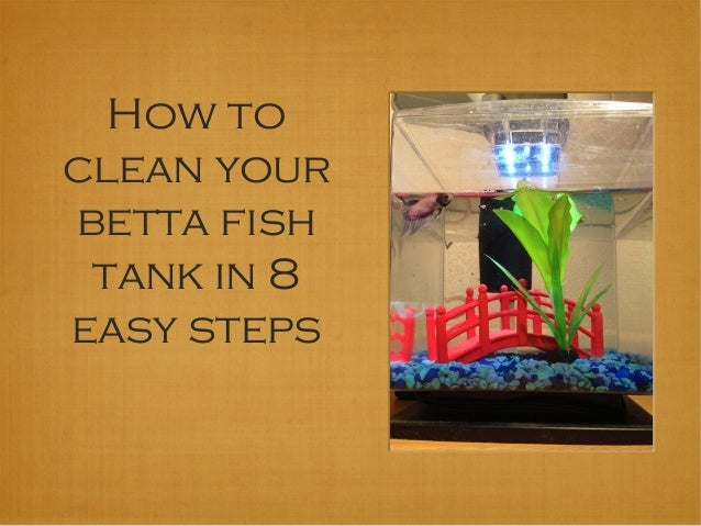 how to clean your betta fish tank in 8 easy steps
