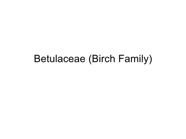 Betulaceae (Birch Family)