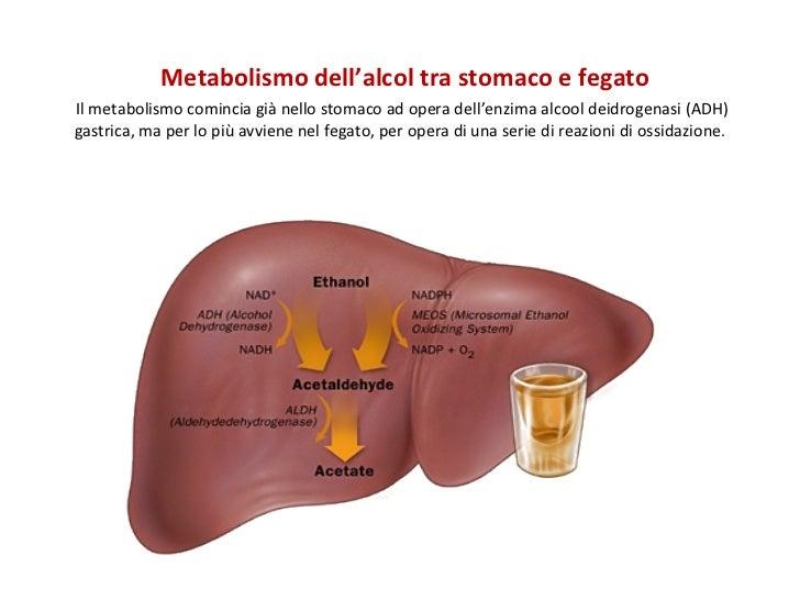 alcol fegato disintossicazione