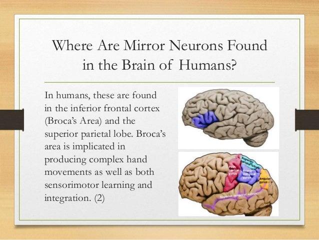 Mirror Neuron Draft 4 21