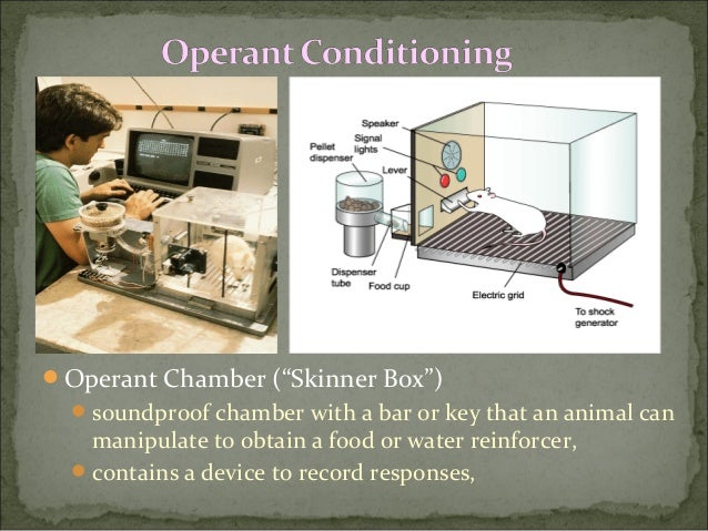 bf skinner operant conditioning essays View and download operant conditioning essays examples also discover topics, titles, outlines, thesis statements, and conclusions for your operant conditioning essay.