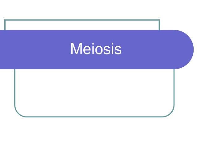 Bft1033 2 meiosis_print
