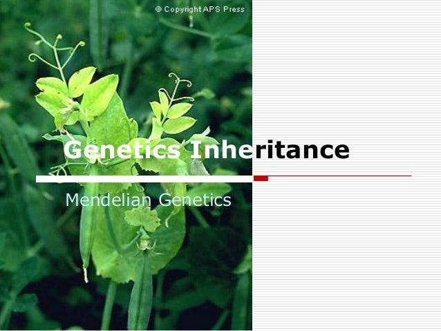 Genetics Inheritance Mendelian Genetics