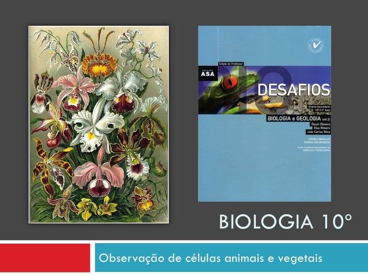 BIOLOGIA 10º Observação de células animais e vegetais