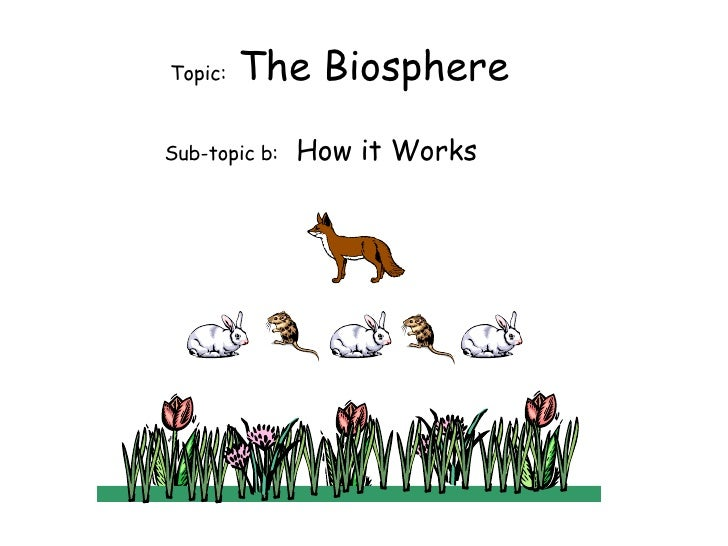 Topic:  The Biosphere Sub-topic b:  How it Works
