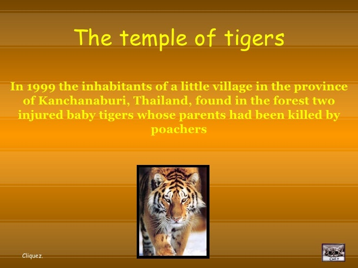 Buddhist Temple Of Tigers