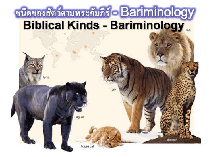 Biblical kindsphotos