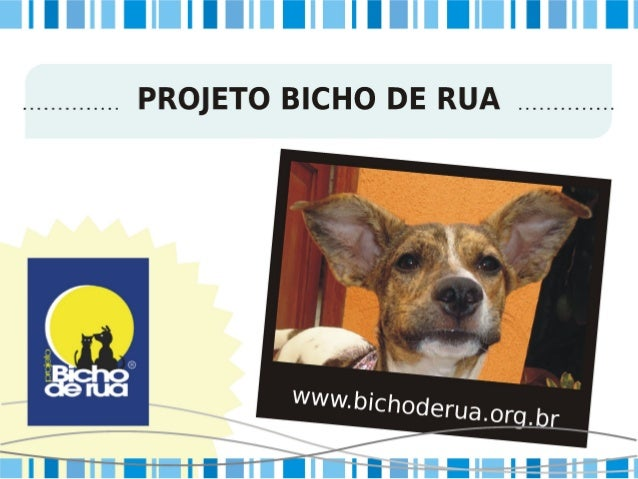 Projeto Bicho de Rua