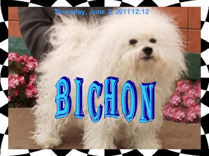 b i c h o n Thursday, June 2, 2011 12:11