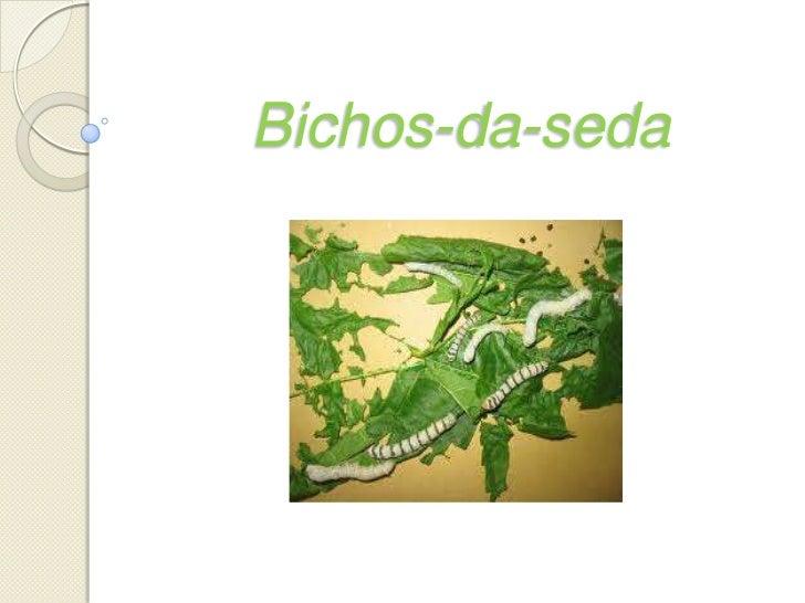 Bichos-da-seda<br />
