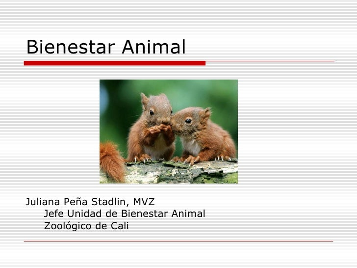 Bienestar AnimalJuliana Peña Stadlin, MVZ    Jefe Unidad de Bienestar Animal    Zoológico de Cali