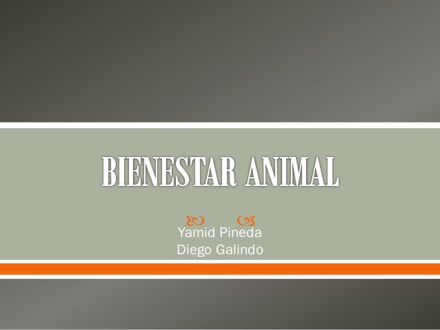   Yamid Pineda Diego Galindo