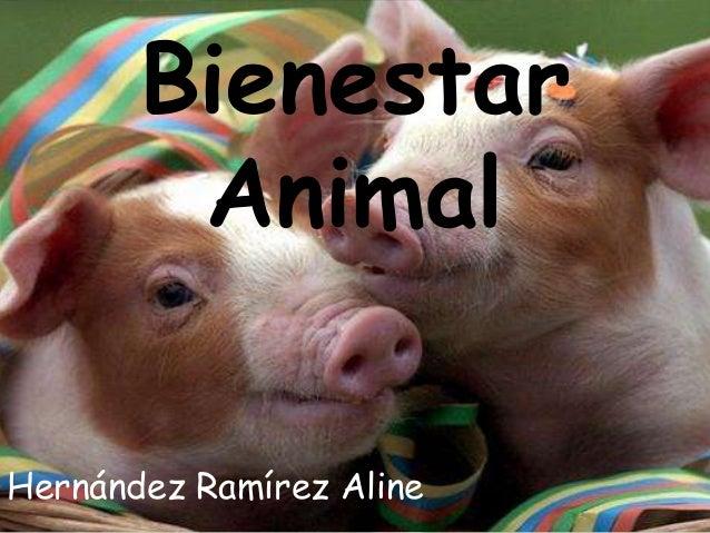 Bienestar Animal Hernández Ramírez Aline