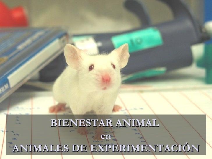 La ética en el uso de los animales de experimentación BIENESTAR ANIMAL  en ANIMALES DE EXPERIMENTACIÓN