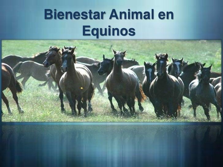 Bienestar animal en equinos 1
