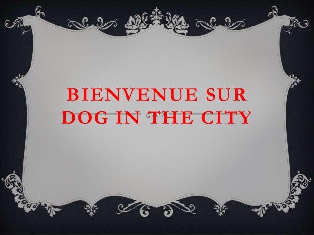 BIENVENUE SUR DOG IN THE CITY