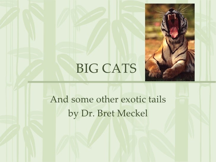 BIG CATS  And some other exotic tails by Dr. Bret Meckel