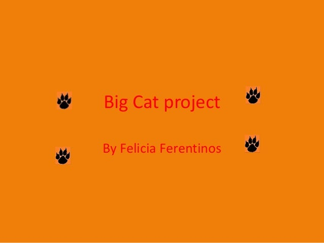 Big Cat project By Felicia Ferentinos