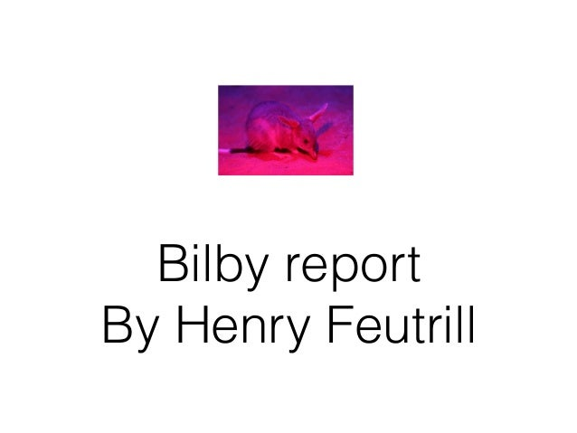 Bilby report By Henry Feutrill