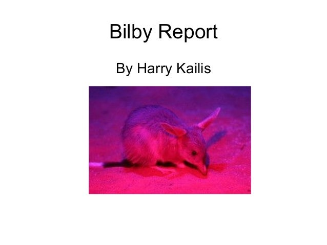 Bilby report by Harry