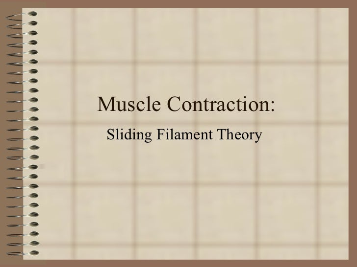 Muscle Contraction: Sliding Filament Theory