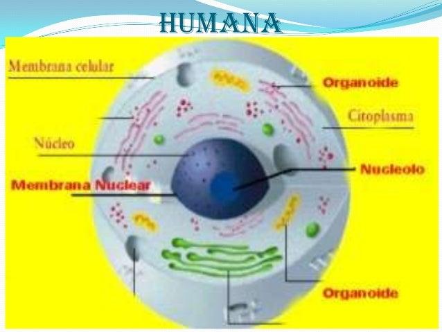 Evolucion Quimica Abiotica Evolución Química Sin