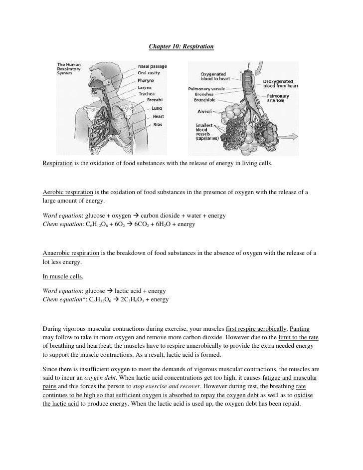respiration homeostasis Review article air pollution and the respiratory system marcos abdo arbexi  ubiratan de paula santosii lourdes conceição martinsiii paulo hilário.