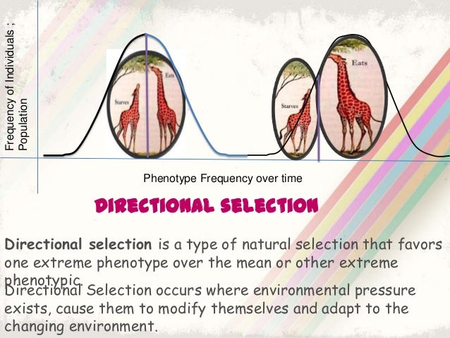 Natural Selection Biology Example