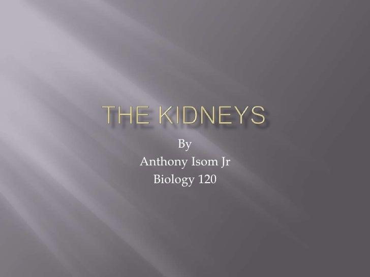 The Kidneys by Anthony Isom, Jr.