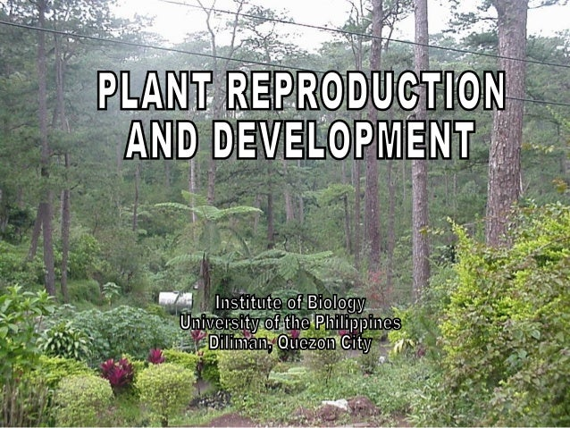• Sexual CycleSexual Cycle – new plants arise from the fusion of parental gametesnew plants arise from the fusion of paren...
