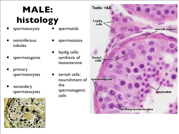 female testosterone deficiency