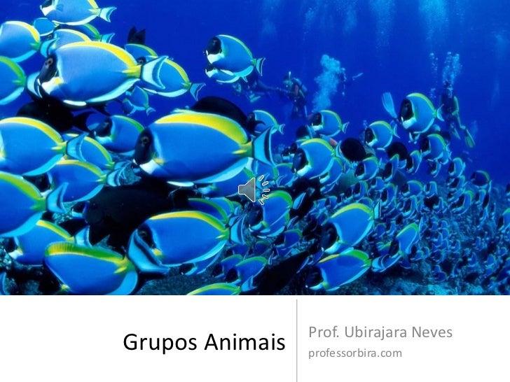 Prof. Ubirajara NevesGrupos Animais   professorbira.com