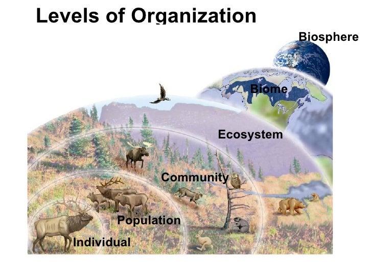 Ms.Iracheta's Biology Class: Principles of Ecology