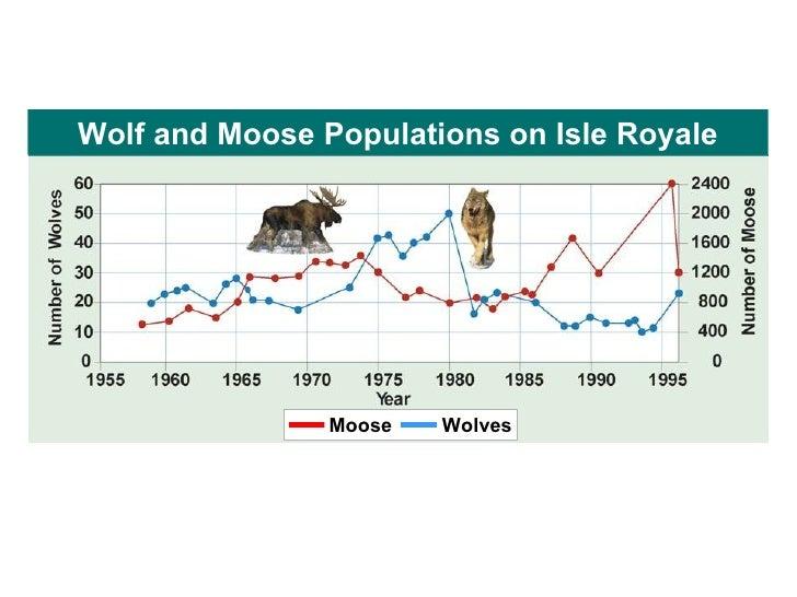 wolf and moose relationship