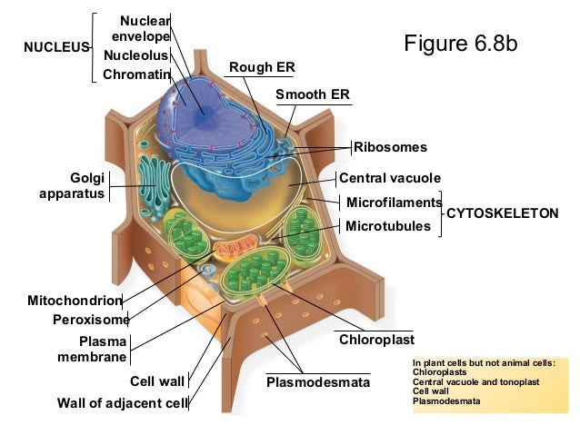 Animal cell vesicle