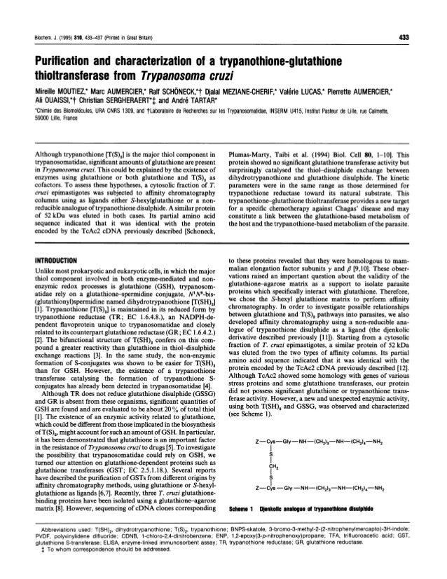 Biochem. J. (1995) 310, 433-437 (Printed in Great Britain)                                                                ...