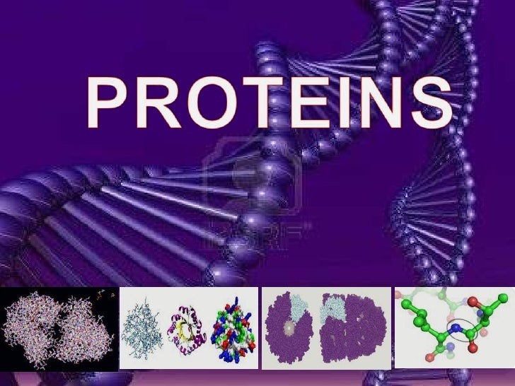 PROTEINS<br />