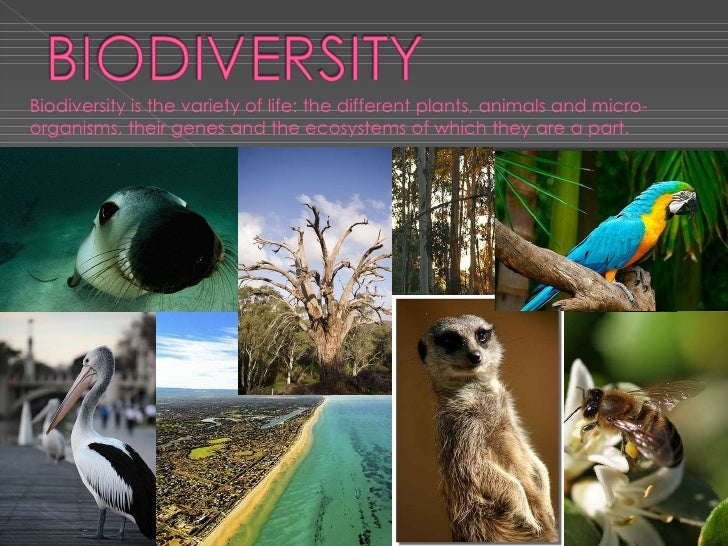 Biodiversity is the variety of life: the different plants, animals and micro-organisms, their genes and the ecosystems of ...