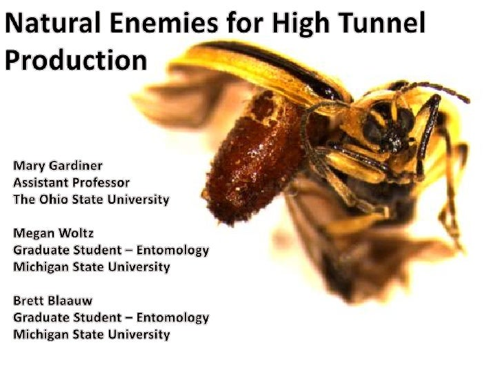 Natural Enemies for High Tunnel Production 2012
