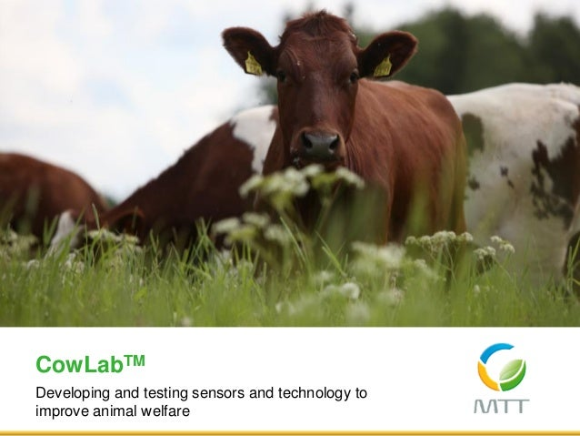 Developing and testing sensors and technology to improve animal welfare CowLabTM