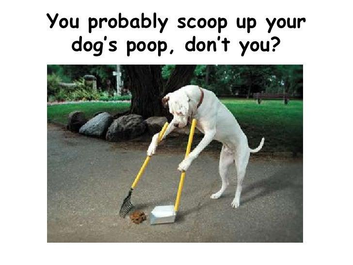 Biodegradable Dog Poop Bags