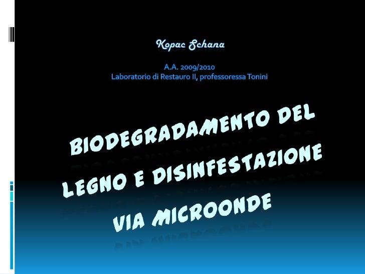 Biodegradamento del legno e disnfestazione via microonde